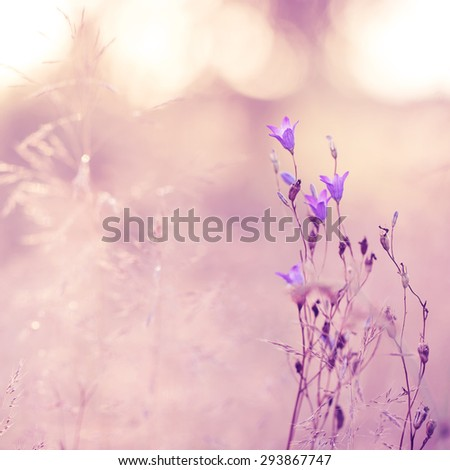 lilac soft blowers on pink background - stock photo