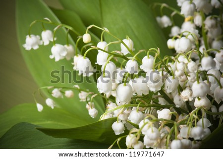 Lilies of the valley, close up - stock photo