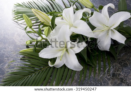 lilly - stock photo