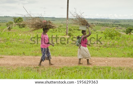 LILONGWE, MALAWI - JANUARY 13: women carrying branches on January 13, 2014 on the edge of Lilongwe, Malawi. Lilongwe is the capital and largest city in Malawi with a population of 979,000. - stock photo