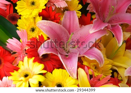 Lily and flameray gerbera - stock photo