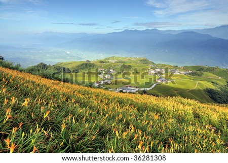 Lily field on a hill - stock photo