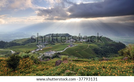 Lily field on a hill with fantastic clouds in the sky - stock photo