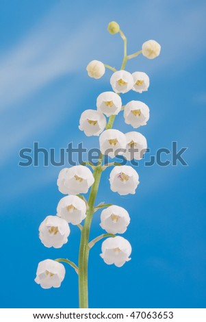 Lily of the valley on a blue sky - stock photo