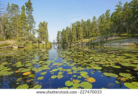Lily Pads on Dogfish lake in Rushing River Provincial Park in Ontario - stock photo