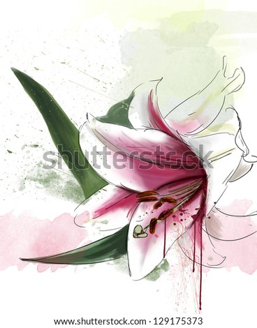 Lily, watercolor - stock photo