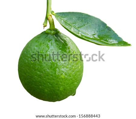 Lime isolated on white - stock photo