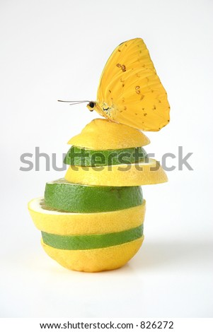 Limon: Creative twist on conceptual images for food, health, etc.  A phoebus philea butterfly on a stack of juicy wedges of lemon and lime. - stock photo