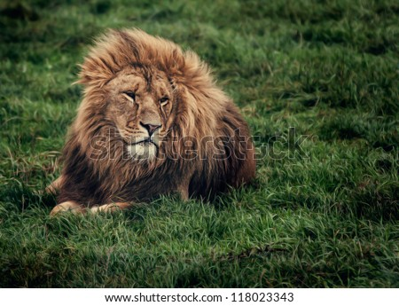 lin laying on grass looking - stock photo