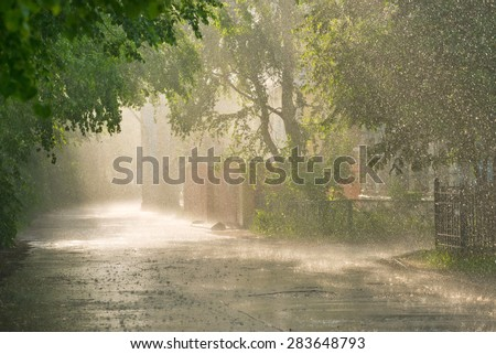 Linden alley in rain in  late afternoon sunlight. - stock photo