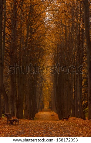 Linden alley overcast autumn day, the vertical frame format - stock photo