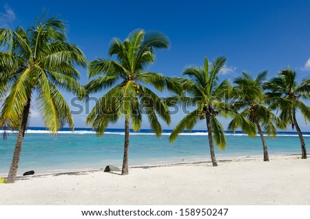 Line of five coconut palm trees at Titikaveka beach in Rarotonga Cook Islands during sunset. - stock photo