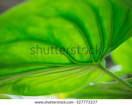 Line of the leaf - stock photo