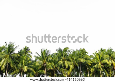 Line up of coconut tree isolated on white background - stock photo