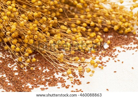 Linen seeds and dry flax plant twigs on the natural linen fabric  background  - stock photo