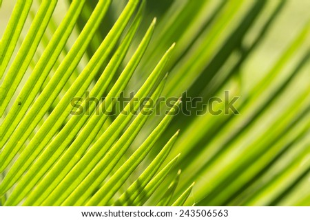 Lines and textures of Green Palm leaves  - stock photo