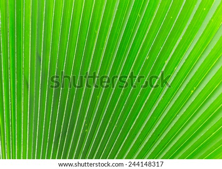 Lines and textures of Green Palm leaves , background - stock photo