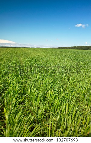 Lines of fresh green grass on sunny field, blue sky with light white clouds - stock photo