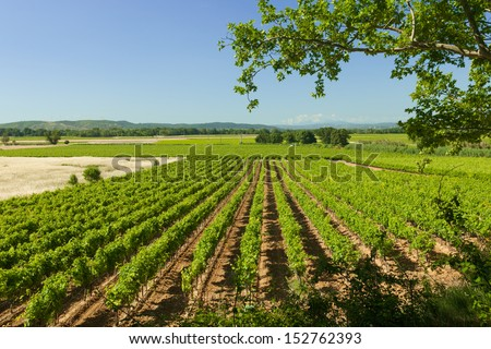 Lines of vineyard agriculture landscape in France - stock photo