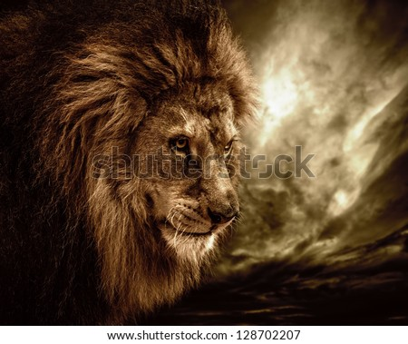 Lion against stormy sky - stock photo
