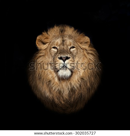 Lion face on black - stock photo