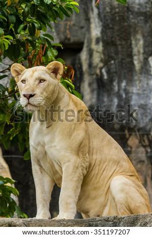 Lion Head. - stock photo