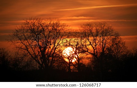 Lion king sunset - stock photo