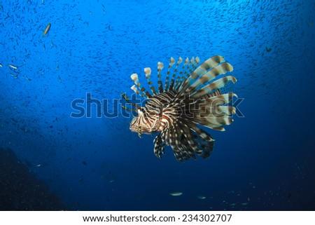 Lionfish - stock photo