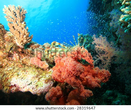 Lionfish and Glassfish on a colorful coral reef - stock photo