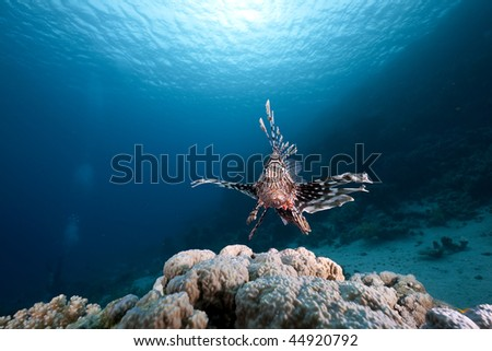 Lionfish and ocean - stock photo