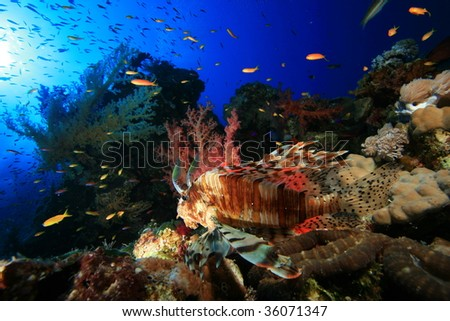 Lionfish on Coral Reef - stock photo