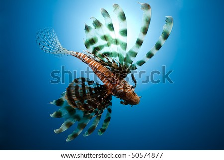 lionfish,sun and ocean - stock photo