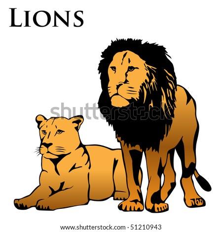 lions illustration - stock photo