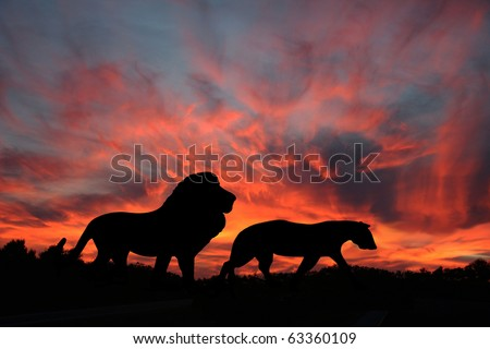 Lions in the Sunset on the Serengeti - stock photo