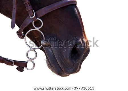 Lips of the Horse in bridle close. The sight of a horse. Horse isolated on a white background. Thoroughbred horse chestnut suit. - stock photo