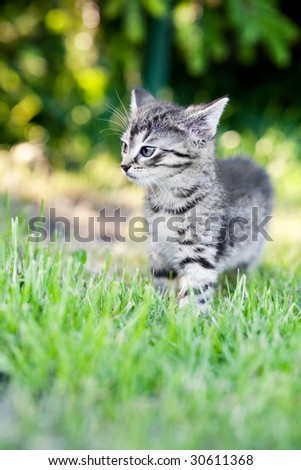Litte cat is hunting in grass. - stock photo