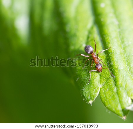 little ant in nature. macro - stock photo