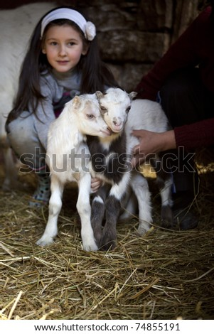 Little baby goats in the farmyard. - stock photo