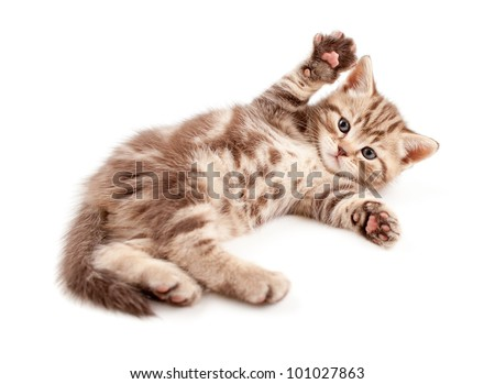 Little baby kitten lying on back - stock photo