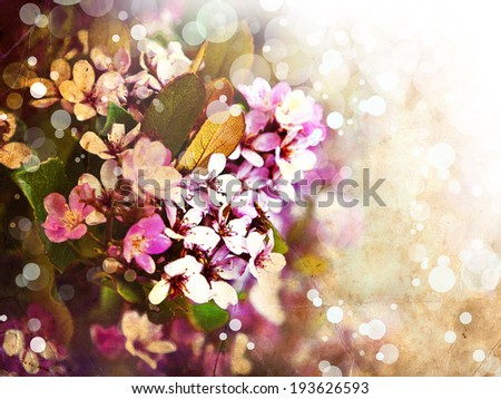 Little beautiful pink flowers on background of blue sky, spring flowers, romantic background - stock photo