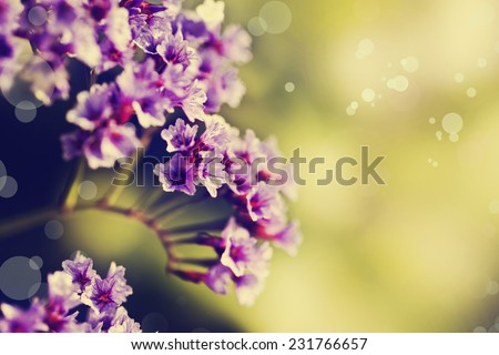 Little beautiful pink flowers on pink background with color filters, spring flowers, romantic background. - stock photo