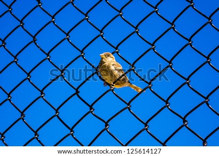 Little bird on a fence with blue sky - stock photo