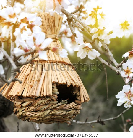 Little Birdhouse in Spring with blossom almond flower  - stock photo