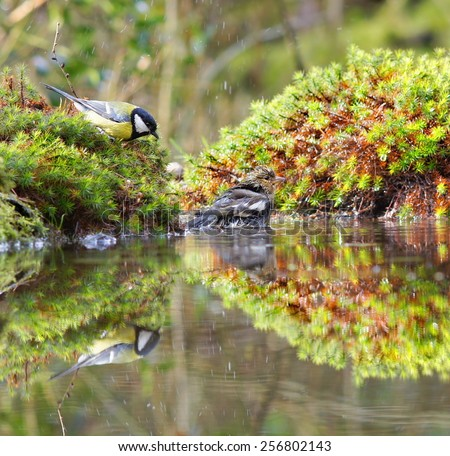 little birds are taking a bath in the fountin at the garden, looks so funny - stock photo