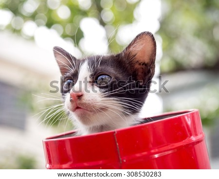 Little black and white kitten in red metal bucket with bokeh background, selective focus on its eye - stock photo