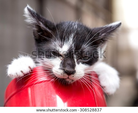 Little black and white kitten in red metal bucket with gray background, upset and irritated face with half open eyes, selective focus on its eye - stock photo