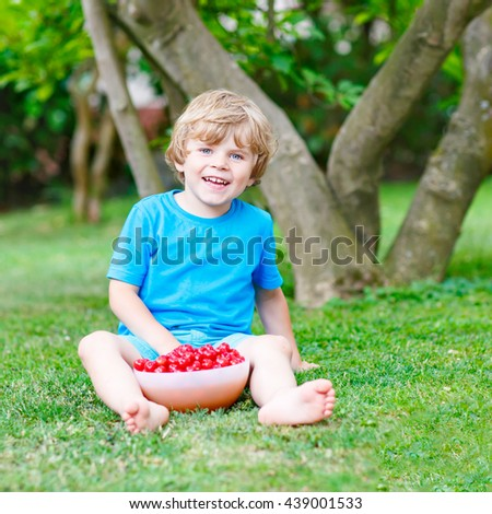Little blond kid boy eating cherries in domestic garden on warm summer day, outdoors. Healthy snack for children in summer. Kids helping with gardening - stock photo