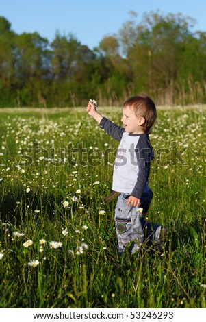 little boy collects daisies - stock photo