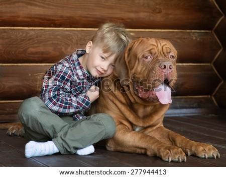 Little boy embracing big Bordeaux dog - stock photo