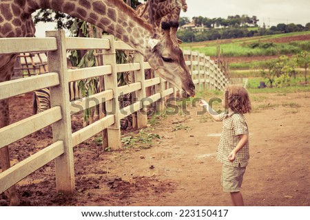 Little boy feeding a giraffe at the zoo at the day time. - stock photo